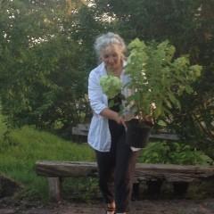 nieuw leven planten